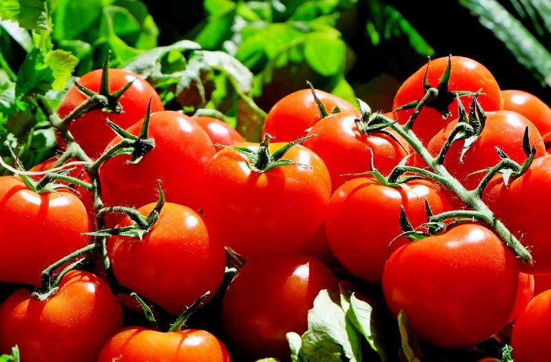 Il Licopene dei pomodori contro il cancro alla prostata